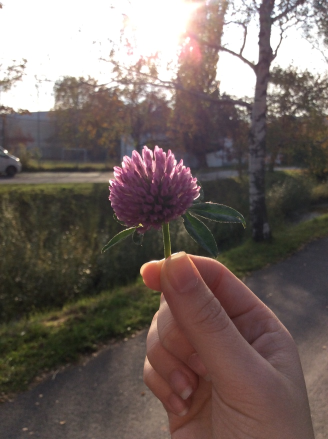 A pretty flower I found on the way to our eating appointment :)